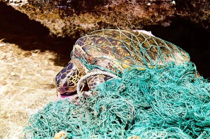 Turtle Overwhelmed