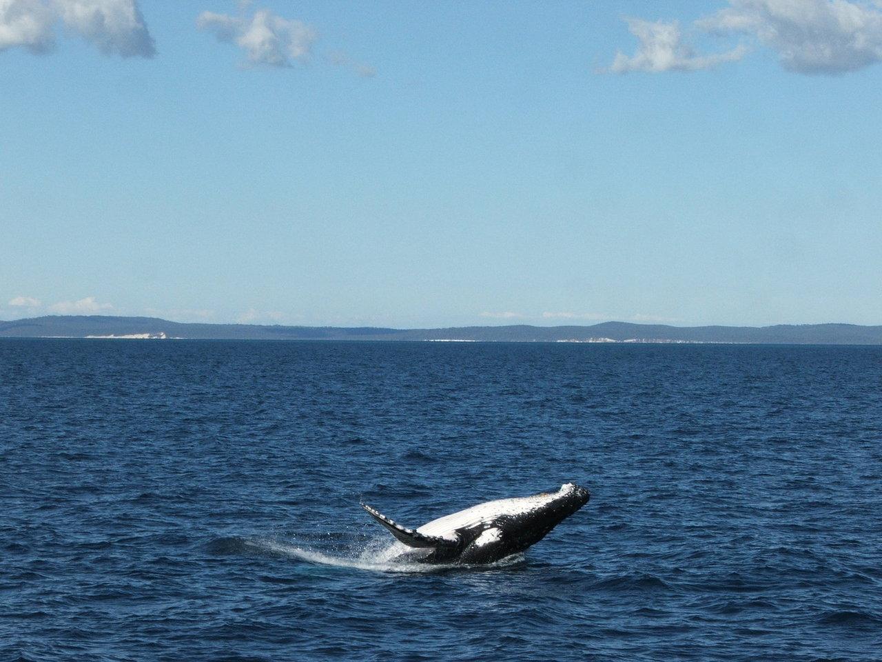 whale-1371145-1280x960